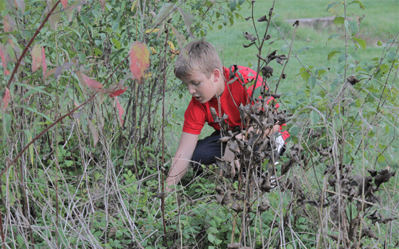 Summer Sizzle Image, shows a young boy outside observing flora.